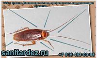 СЭС г. Кубинка Московская область профессиональная дезинсекция тараканов