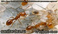 СЭС г. Чехов Московская область профессиональная дезинсекция муравьёв