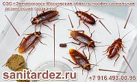 СЭС г. Электрогорск Московская область профессиональная дезинсекция тараканов