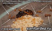 СЭС г. Наро-Фоминск Московская область профессиональное уничтожение  муравьёв