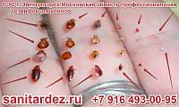 СЭС г. Электрогорск Московская область профессиональная дезинфекция клопов