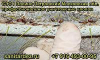 СЭС г. Лосино-Петровский Московская обл. профессиональное уничтожение клопов