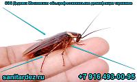 СЭС Дедовск Московская обл. профессиональная дезинфекция тараканов