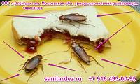 СЭС г. Электросталь Московская обл. профессиональная дезинфекция тараканов