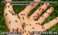 СЭС г. Яхрома Московская область профессиональная дезинсекция муравьёв