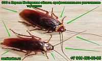 СЭС г. Яхрома Московская область профессиональное уничтожение тараканов