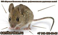 СЭС г. Пересвет Московская область профессиональная дератизация мышей