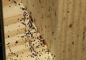 СЭС Подольск избавление от клопов Московская область мкр. Юго-Западный Красногвардейский Бульвар
