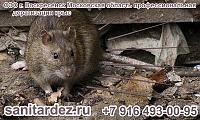 СЭС г. Воскресенск Московская область профессиональная дератизация крыс
