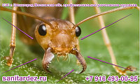 СЭС г. Звенигород Московская обл. профессиональное уничтожение муравьёв