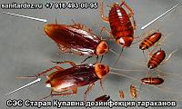 СЭС Старая Купавна Московская обл. профессиональная дезинфекция тараканов