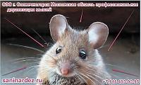 СЭС г. Солнечногорск Московская область профессиональная дератизация мышей