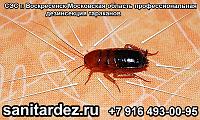 СЭС г. Воскресенск Московская область профессиональная дезинсекция тараканов